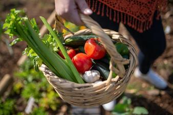 Urban Farming – die Alternative für die Zukunft?